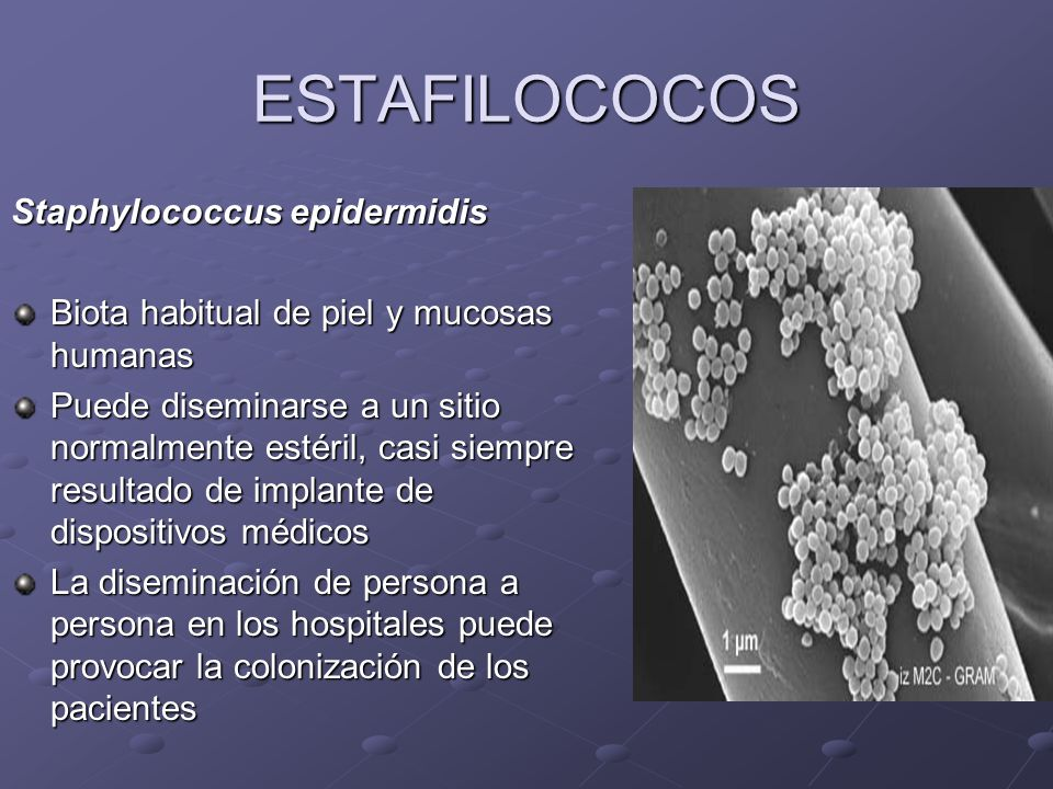 ESTAFILOCOCO EPIDERMIDIS DOWNLOAD