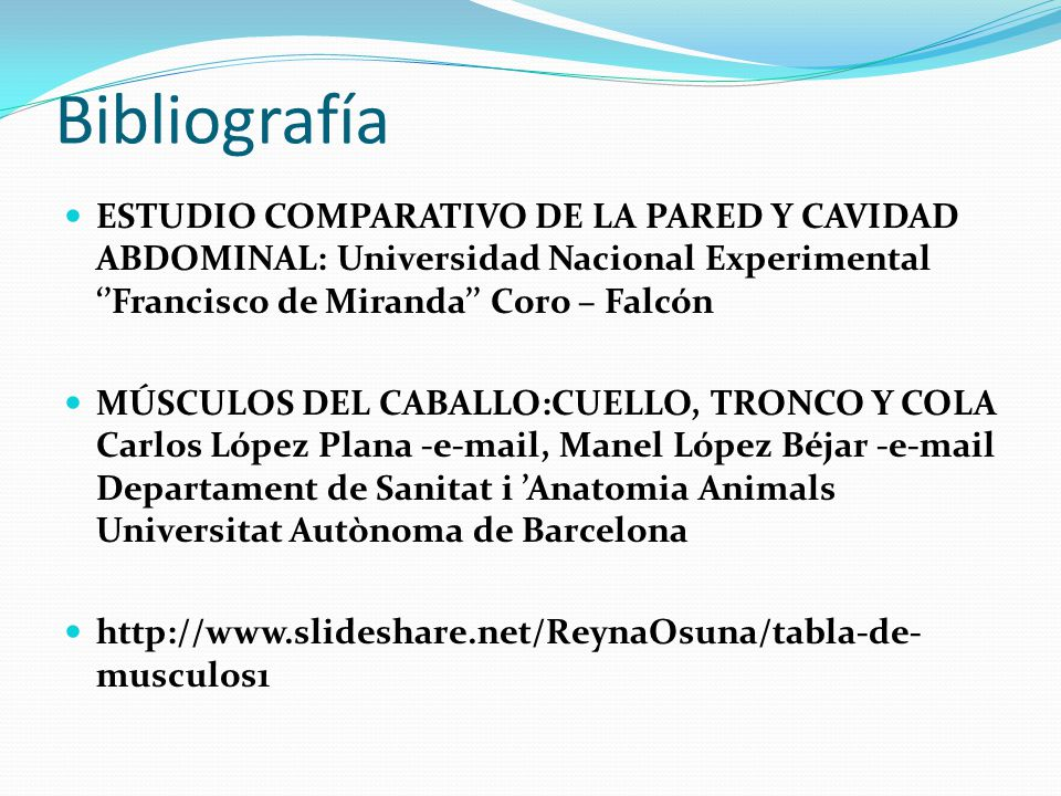 Músculos Abdomen tronco y cola del equino - ppt video online descargar
