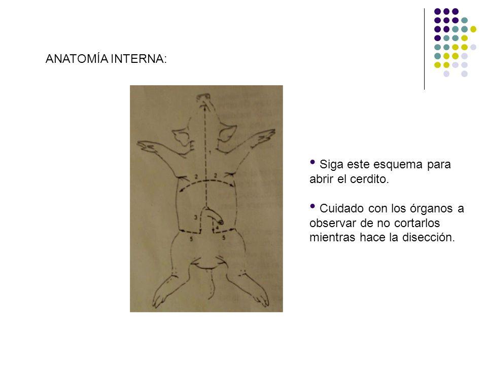 Anatomía de vertebrados - ppt descargar