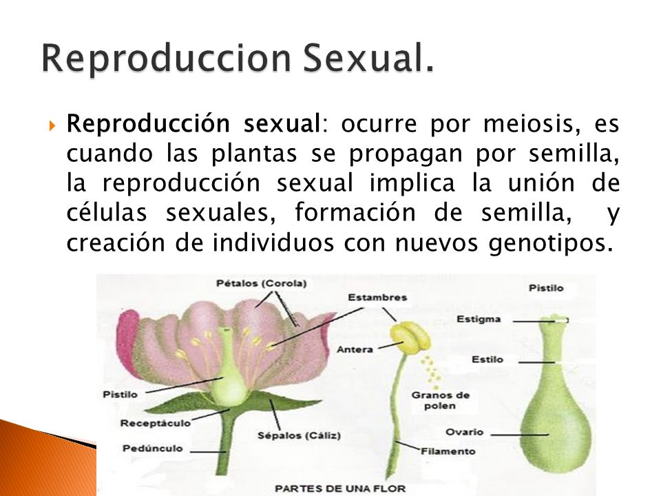 Fotos de reproduccion sexual de las plantas