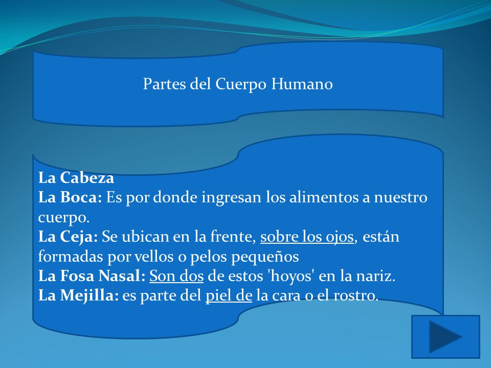 El cuerpo Humano Concepto Imágenes Partes del Cuerpo Ejercicios ...