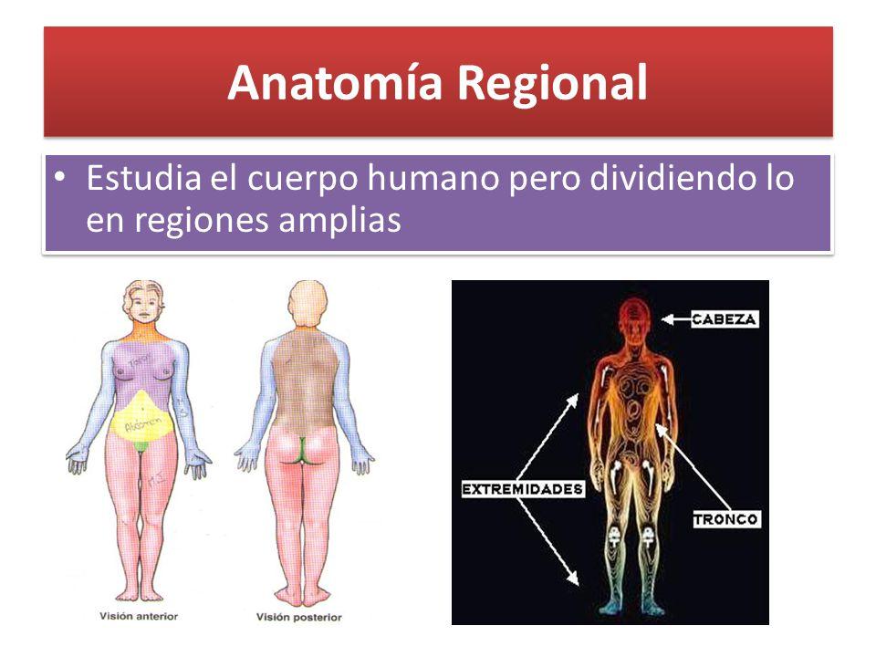 Famoso Anatomía Humana Básica Imagen - Imágenes de Anatomía Humana ...