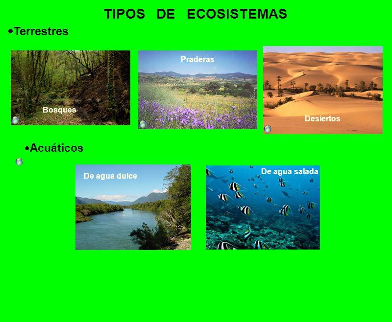 Los Ecosistemas Componentes Del Ecosistema Ppt Video Online Descargar