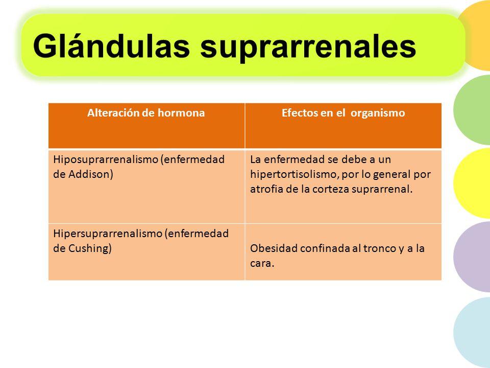 Glándulas endocrinas. - ppt descargar