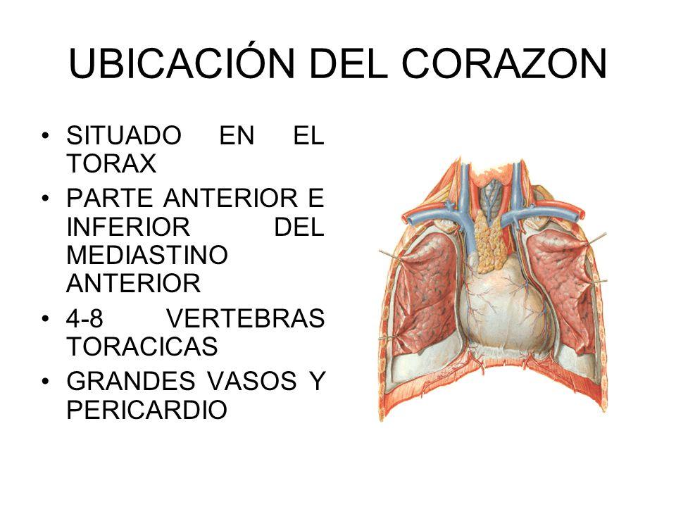 ANATOMIA DEL CORAZON. - ppt descargar
