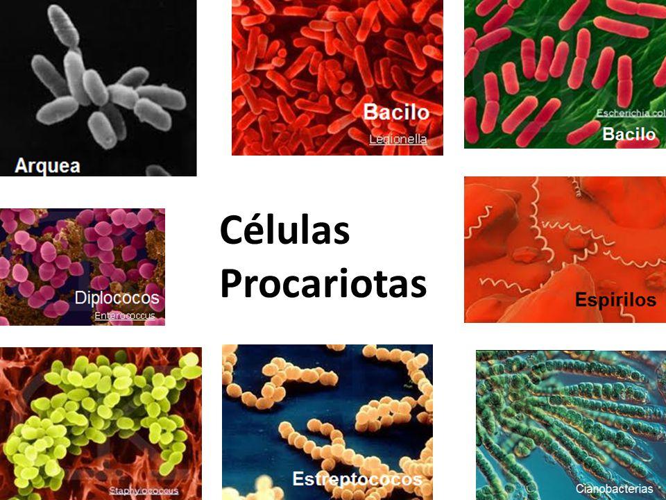 Resultado de imagen de ejemplos celulas procariotas