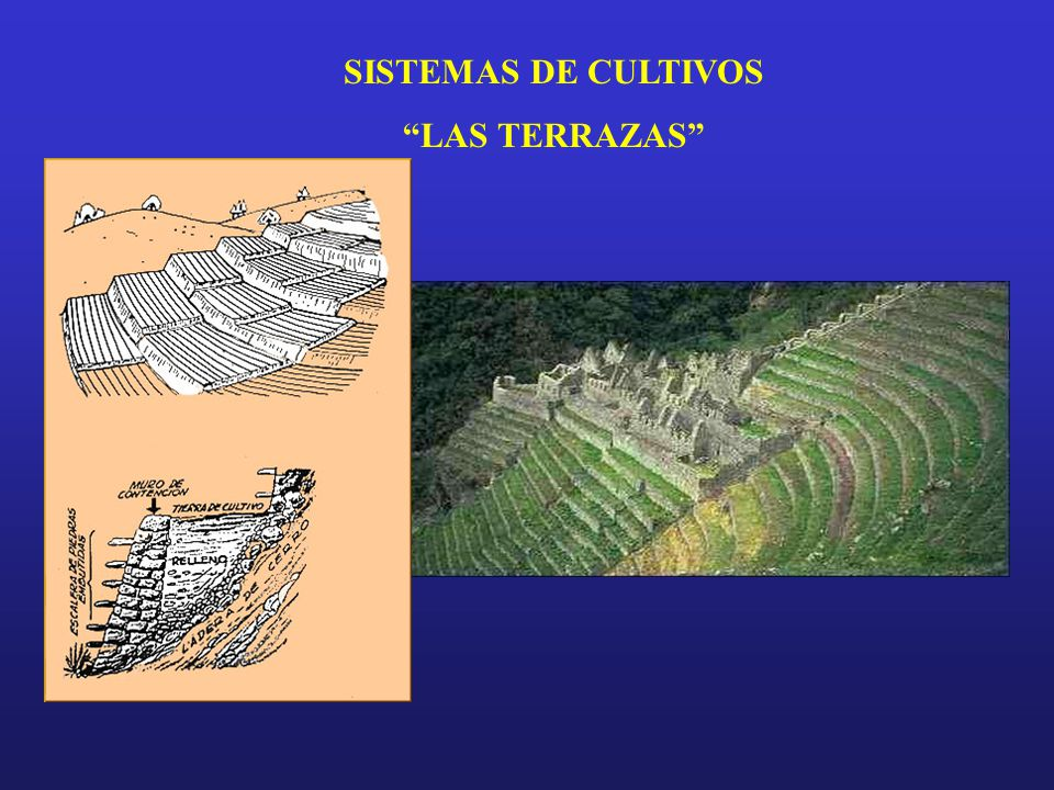 Los Incas Ppt Video Online Descargar