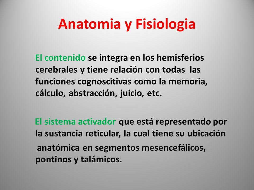 Lujoso La Anatomía Y Fisiología Del Cerebro Adorno - Anatomía de Las ...
