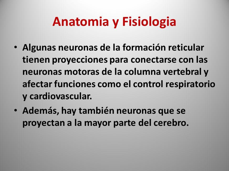 Fisiopatologia en los trastornos de la conciencia - ppt descargar
