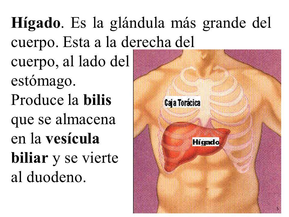 Excepcional Sistema Del Cuerpo De La Vesícula Biliar Colección ...