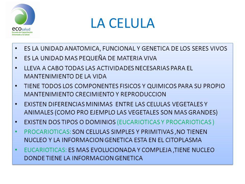 ANATOMIA Y FISIOLOGIA LA CELULA AGUA CORPORAL TOTAL - ppt descargar