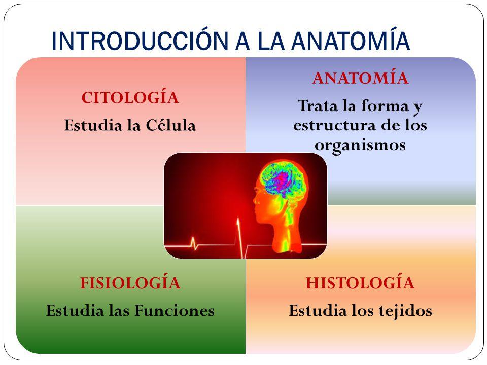 Lujo Introducción A La Anatomía Humana Ideas - Anatomía de Las ...