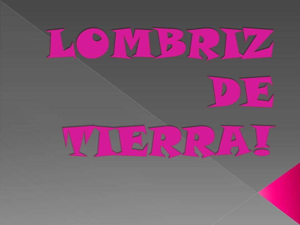 PRESENTACIÓN LOMBRIZ DE TIERRA!! - ppt descargar
