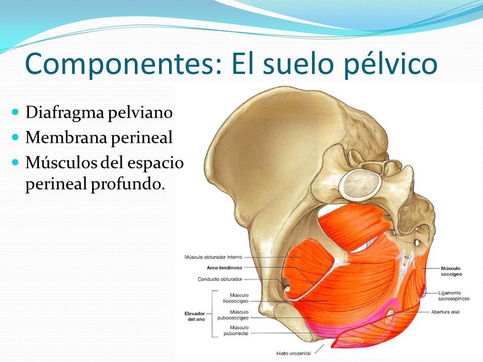 Dr. Danny Salazar Pousada Ginecólogo - obstetra - ppt video online ...