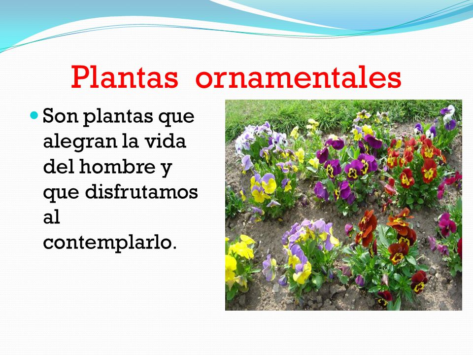 La maravilla de las plantas ppt video online descargar for Plantas medicinales y ornamentales