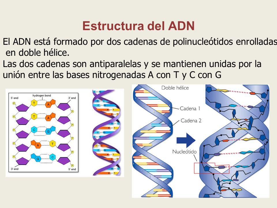 La Revolución Genética Ppt Descargar