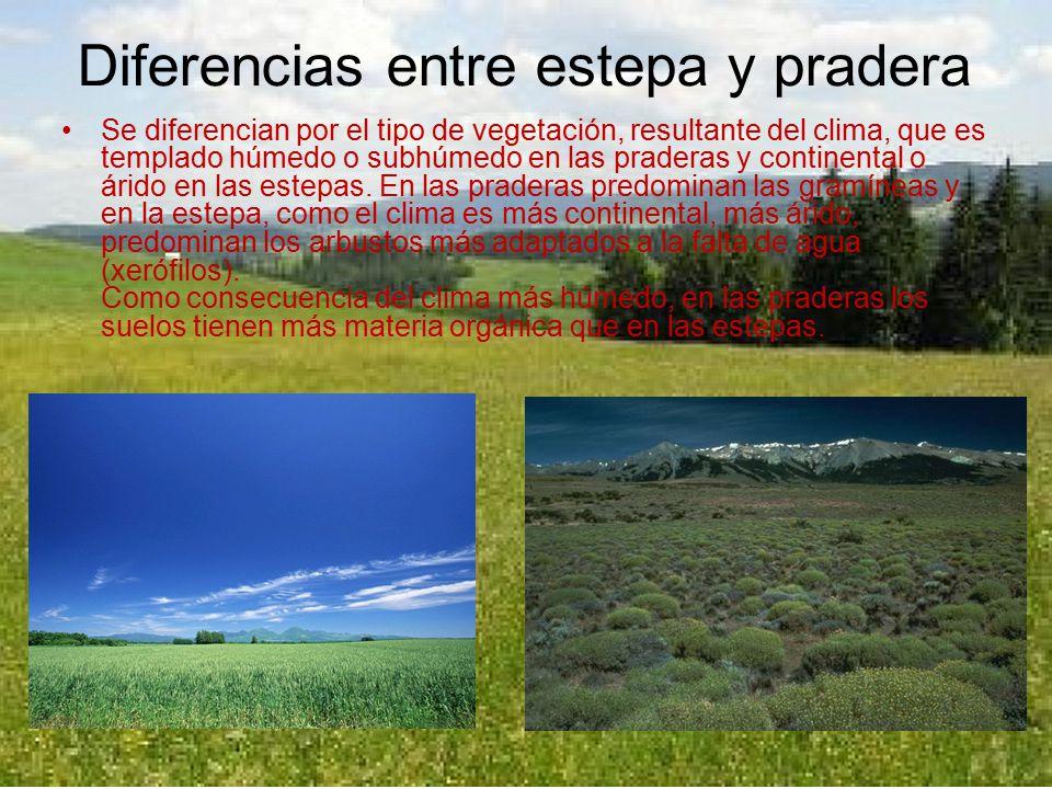 Argentina los calientes y hermosos quejidos de alicia de san fernando - 1 1
