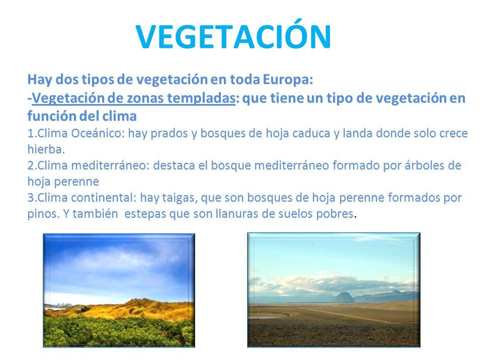 Los paisajes de europa y espa a ppt video online descargar for Porque hay arboles de hoja perenne