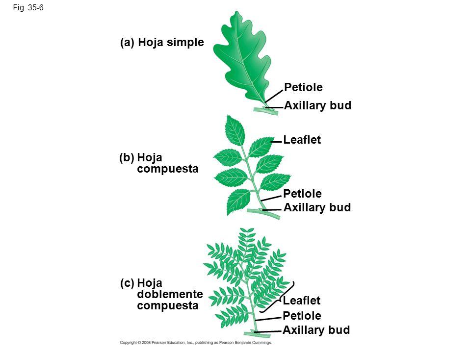 Morfología y anatomía de plantas vasculares - ppt video online descargar