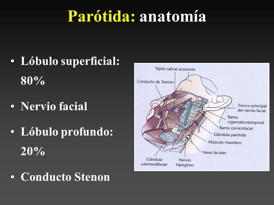 Glándulas Salivales. - ppt video online descargar