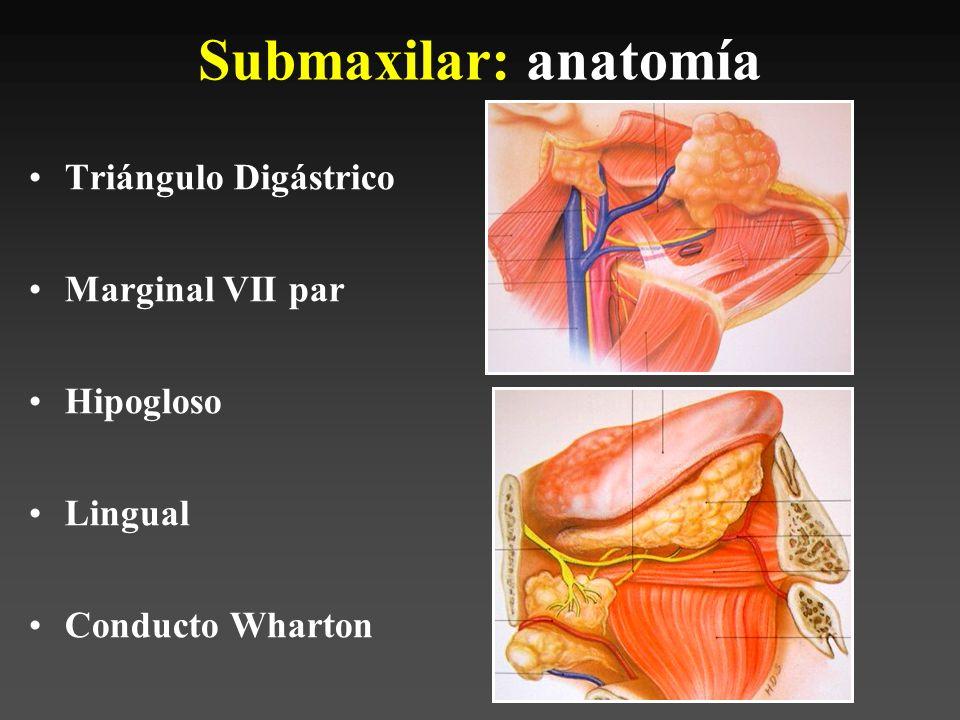 Bonito Anatomía De La Glándula Parótida Inspiración - Anatomía de ...