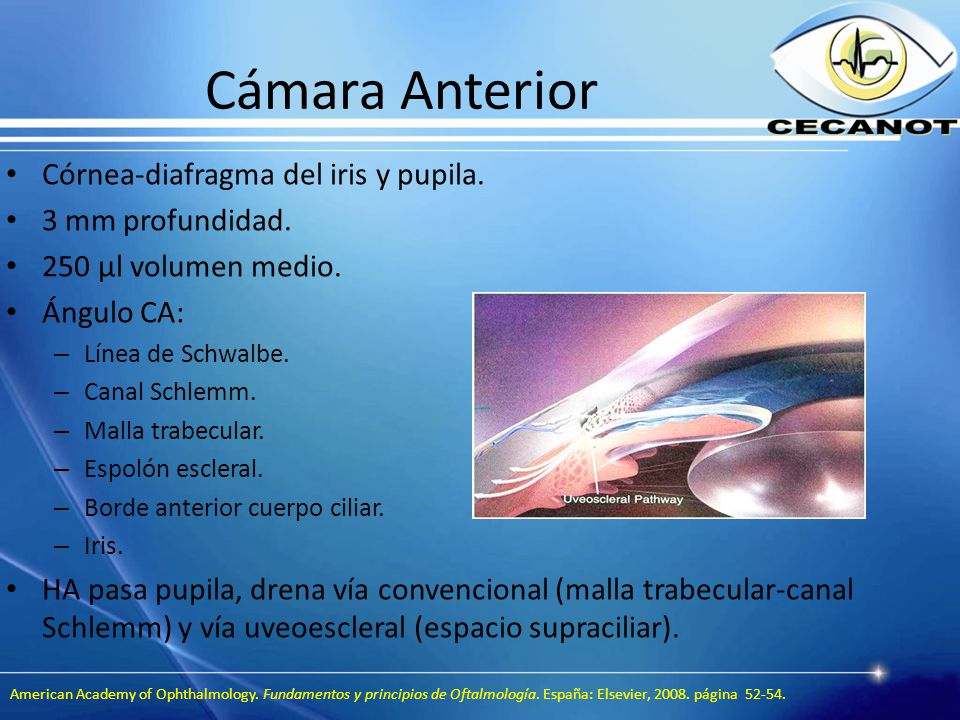 Increíble Anatomía Espolón Escleral Bandera - Imágenes de Anatomía ...
