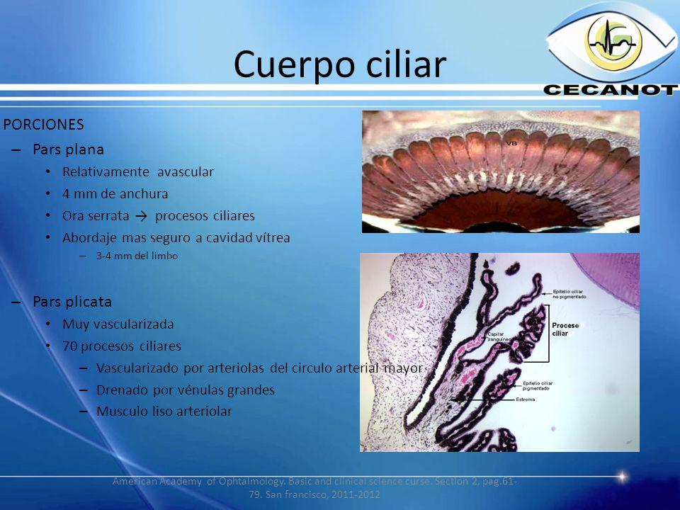 Anatomía del globo ocular y estructuras del segmento anterior - ppt ...
