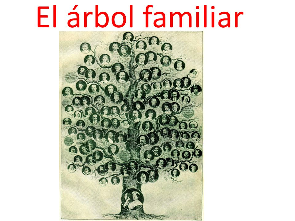 El árbol Familiar Ppt Descargar