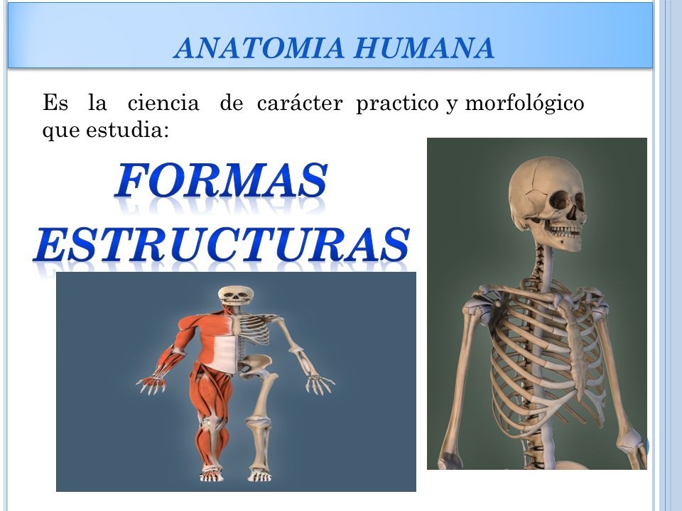 ANATOMIA Y FISIOLOGIA INTEGRANTES: ANGELLY ZARATE LINA DONADO - ppt ...