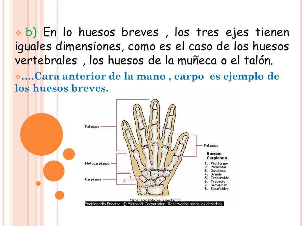 Sistema óseo La osteología es la rama de las Anatomía que estudia ...
