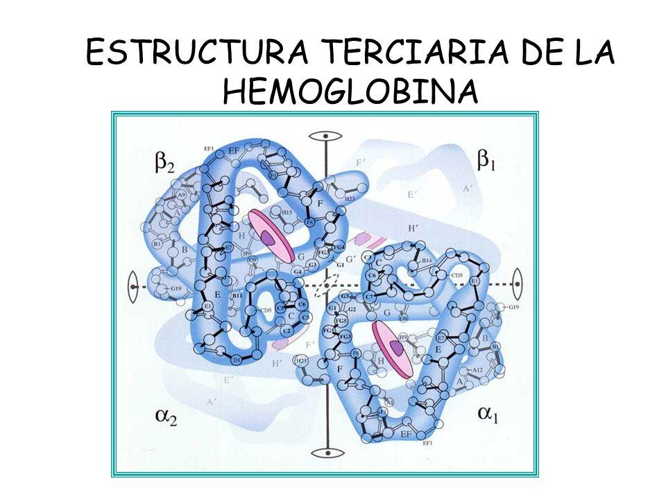 Hemoglobina Hemoglobina Es Una Hemeproteína Ppt Video