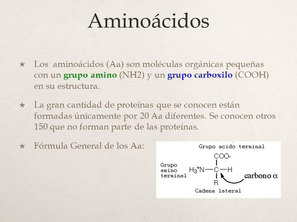 Proteínas Aminoácidos Fórmula Estructural Enlace Peptídico