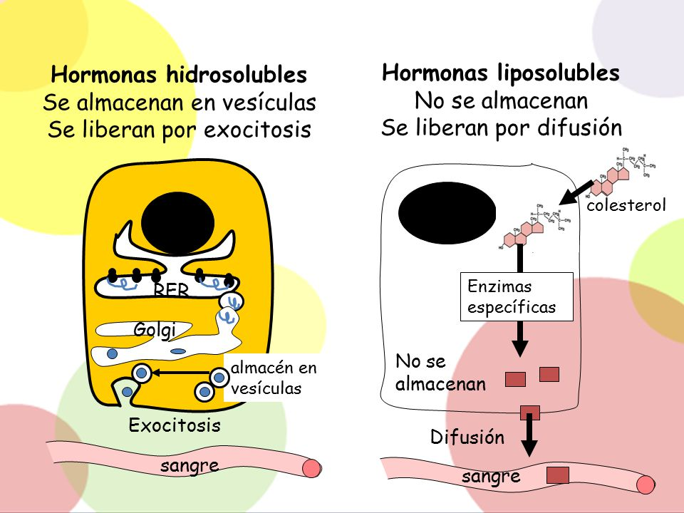 Hormonas hidrosolubles