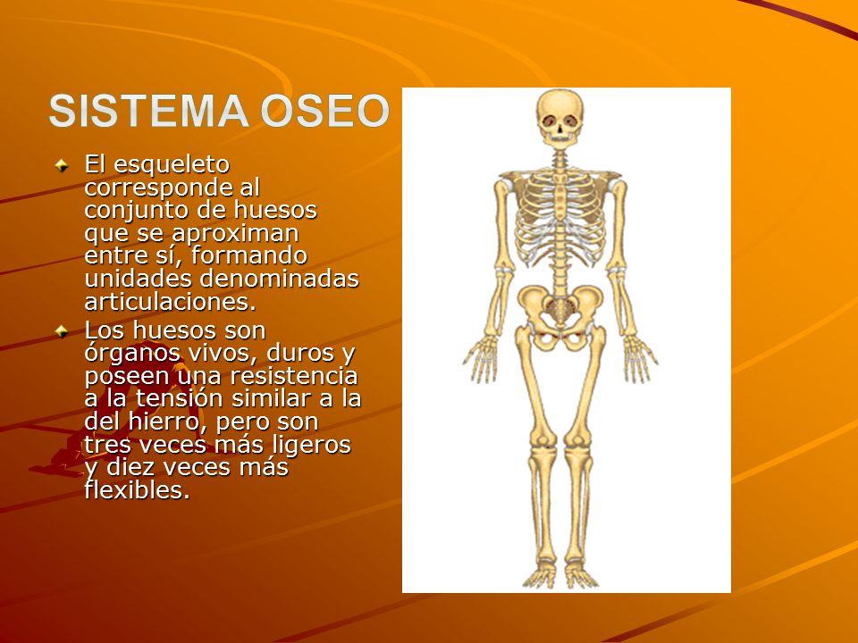 Sistema óseo. - ppt descargar