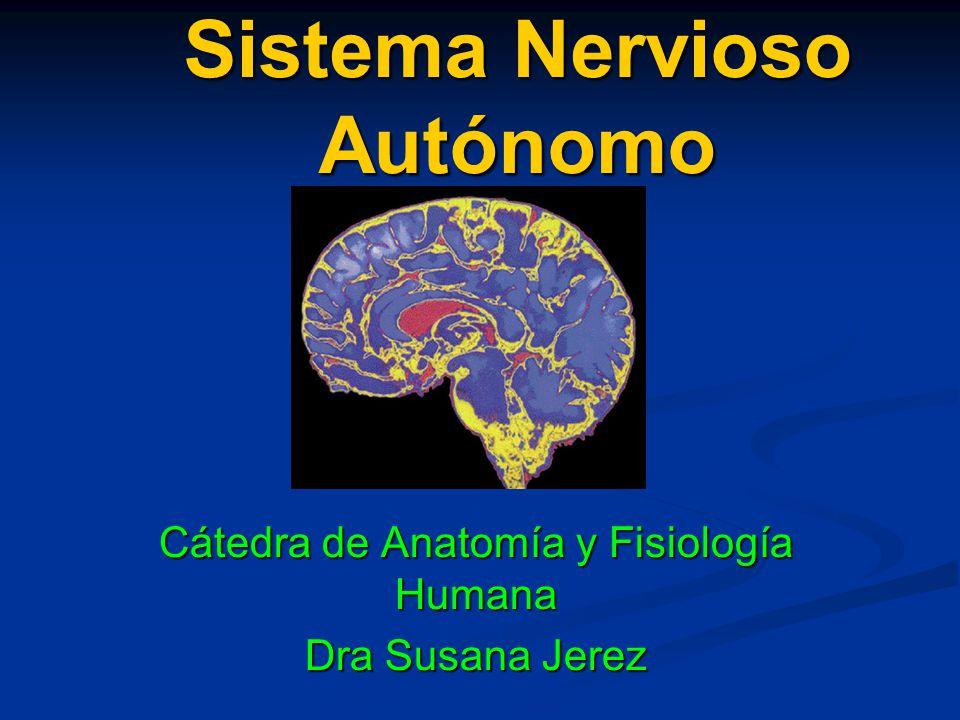 Sistema Nervioso Autónomo - ppt descargar