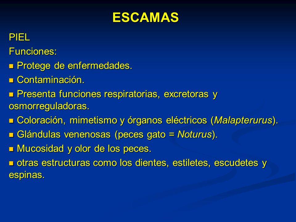 ESCAMAS PIEL Funciones: Protege de enfermedades. Contaminación ...