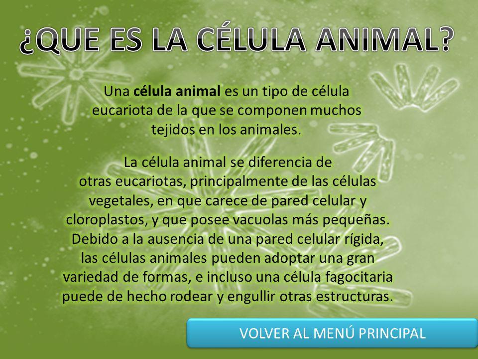 Menu principal la c lula animal partes de la c lula animal cr ditos ppt video online descargar - Informacion sobre la fibra vegetal ...