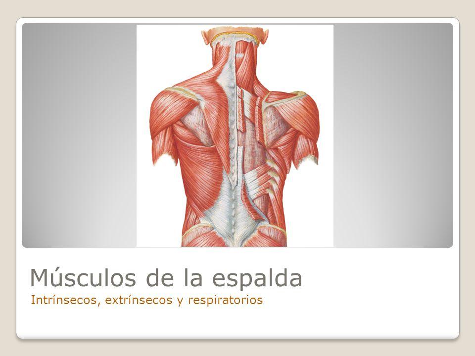 Espalda Fundamentos de anatomía Universidad de Ciencias Médicas ...