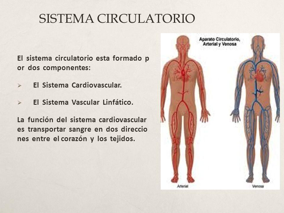 Circuito Circulatorio : Sistema circulatorio dr jorge a funes c ppt video