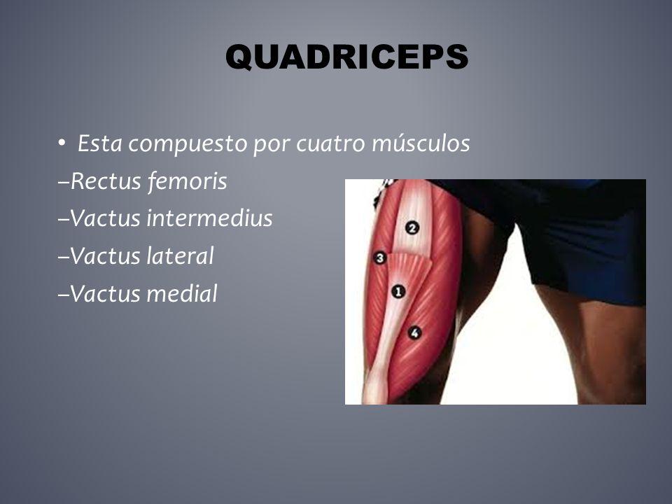 Sistema Musculo esquelético Músculos y Acción - ppt descargar