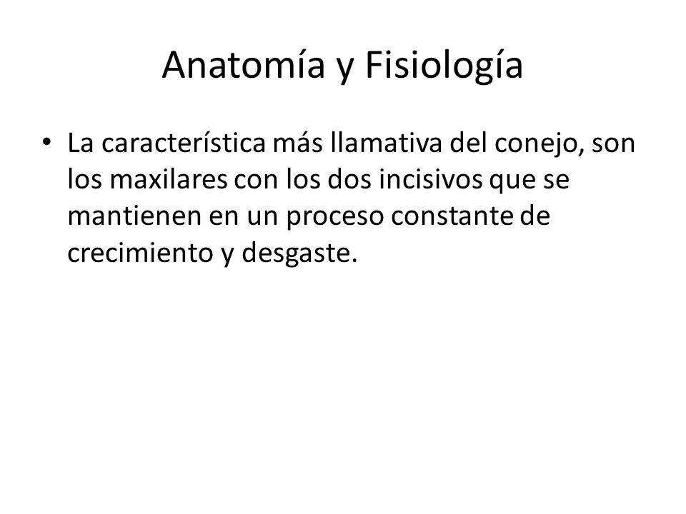Lujoso Anatomía Cabeza De Conejo Foto - Imágenes de Anatomía Humana ...