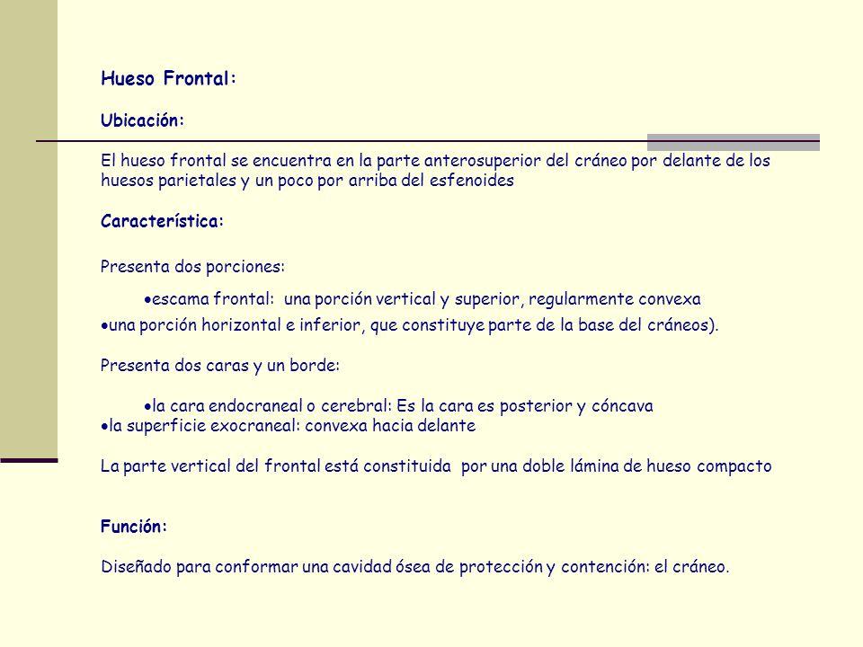 SISTEMA ESQUELÉTICO Es De Forman Su función es Cartílagos - ppt ...
