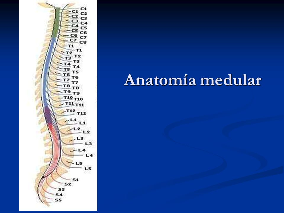 Sindromes Medulares FLENI - ppt descargar
