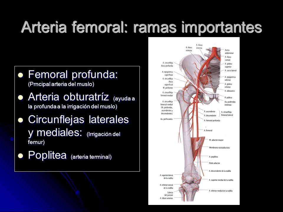 Excepcional Ramas De La Arteria Femoral Adorno - Imágenes de ...