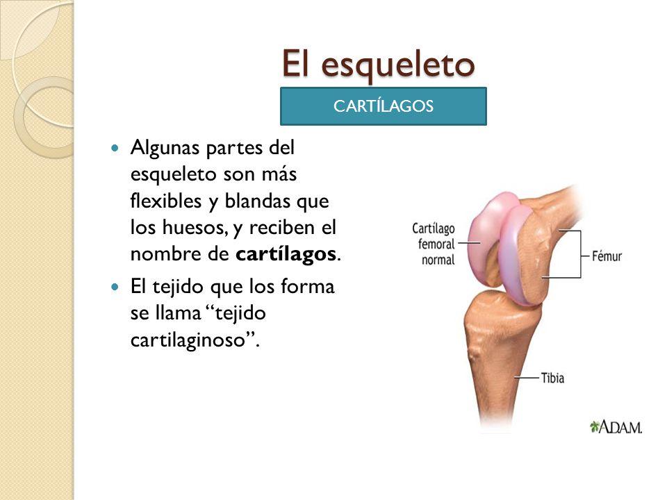 EL APARATO LOCOMOTOR. - ppt video online descargar