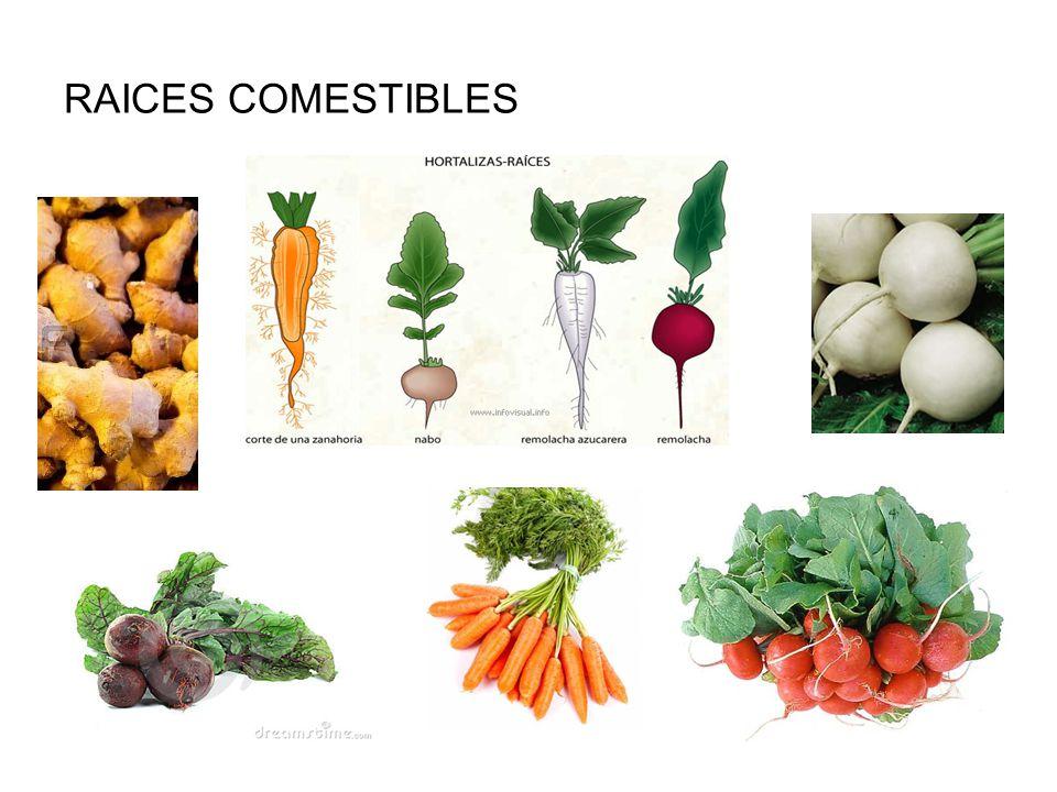 Resultado de imagen para hortalizas de raiz comestible