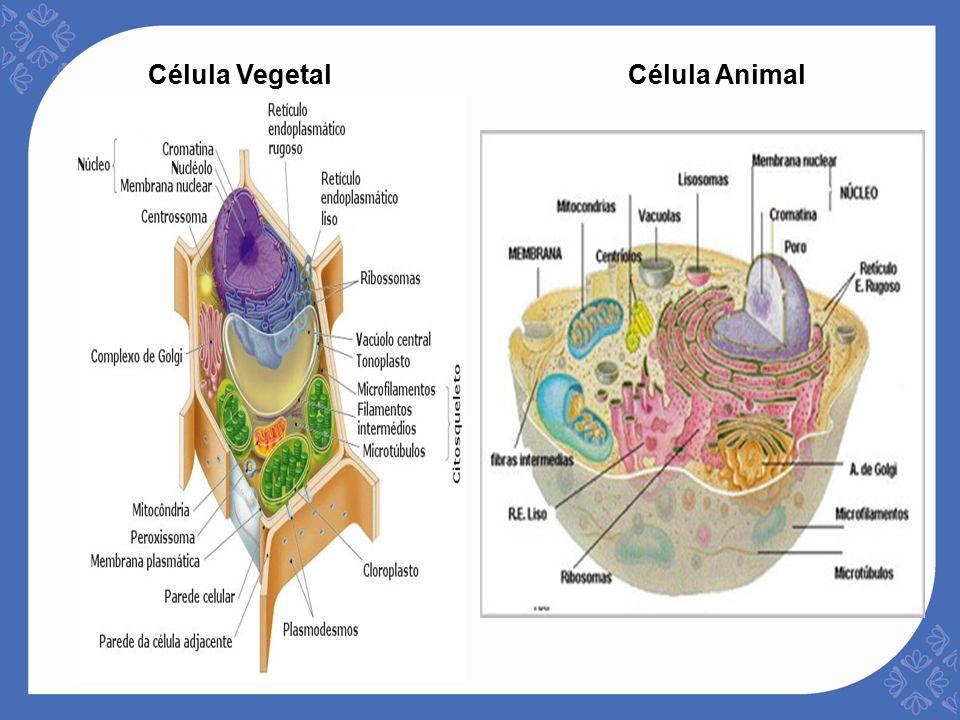 Unidad 1 Estructura Celular Y Requerimientos Nutricionales