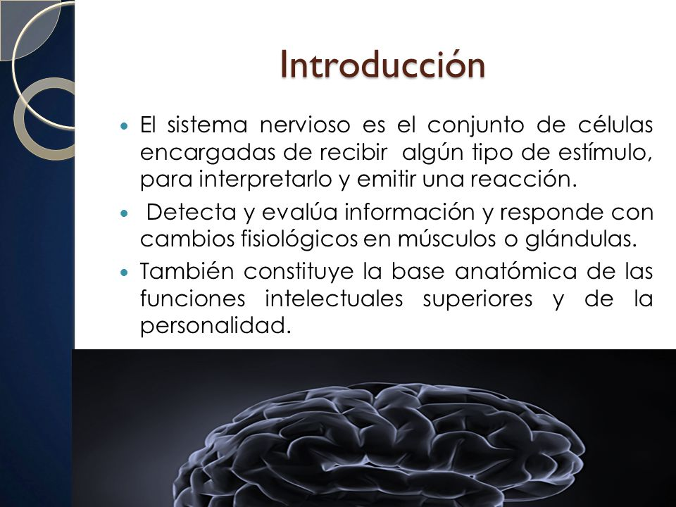 SISTEMA NERVIOSO. - ppt video online descargar