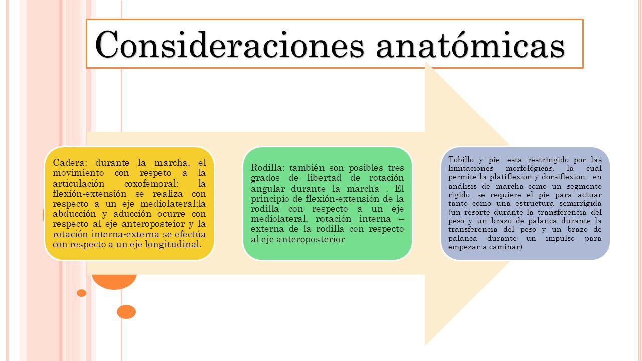 Magnífico Anatomía De La Uña Del Pie Regalo - Anatomía de Las ...
