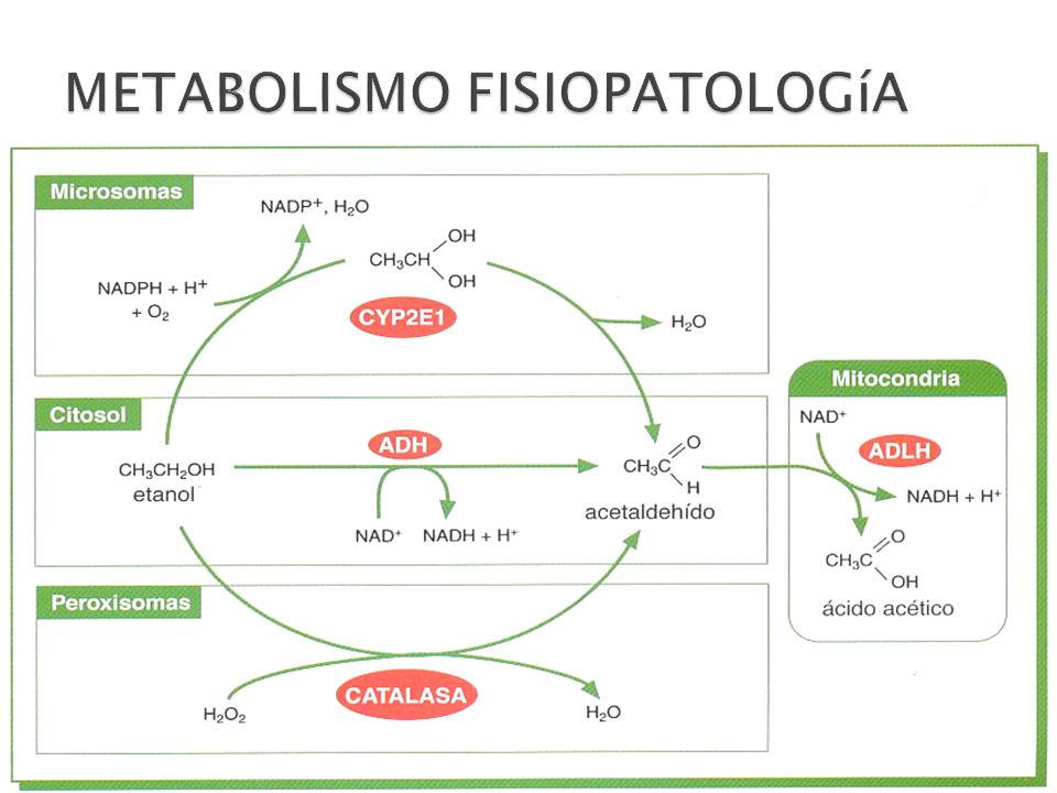 HEPATOPATIA ALCOHOLICA PDF DOWNLOAD
